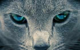 морда, eyes