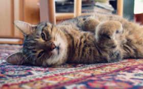 прикольный котик