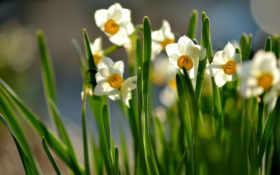 цветы, весна Фон № 32970 разрешение 1920x1200
