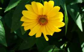 Цветы 19990