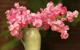 flowers, wallpaper Фон № 2264 разрешение 1920x1080