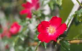 Цветы 20048