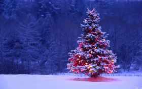 дерево, огни, снег