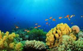 world, underwater, pisces