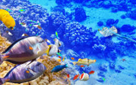 underwater, world, zhivotnye