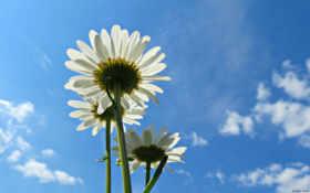 flowers, цветы, desktop Фон № 113924 разрешение 1920x1200