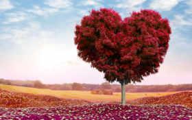 дерево, сердце, поле