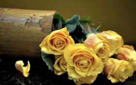 желтые, розы, цветы