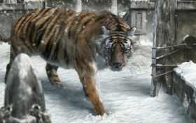 тигр, msk