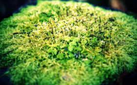 зелень, макро Фон № 24021 разрешение 1680x1050