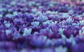desktop, world, цветы