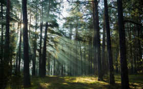 деревья, лучи