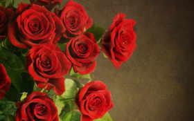 цветы, букет, красные