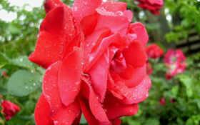 Цветы 93633