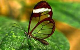 butterfly, puntos, votos