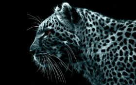 графика, леопард