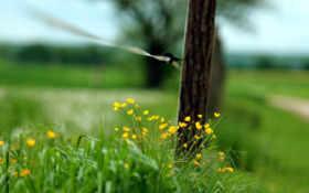 макро, забор, трава