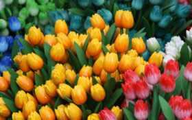 цветы, flowers, тюльпаны Фон № 80704 разрешение 2560x1440