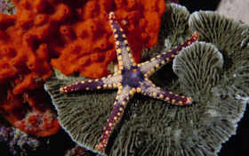 beauty, starfish
