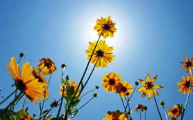 природа, flowers Фон № 20032 разрешение 2560x1600