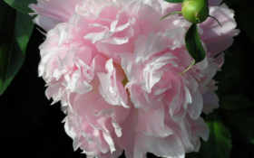 artfotki, cvety