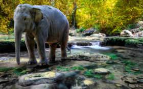 таиланд, слон