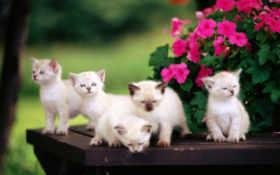 котята, милые