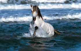 лошадь в воде