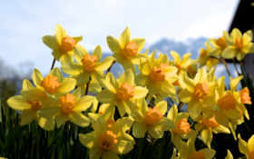 много, цветы Фон № 15633 разрешение 1920x1200