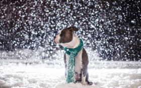 пес, снег