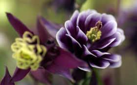 цветоклепестки Фон № 16413 разрешение 1920x1200
