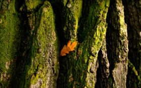 дерево, кора Фон № 23961 разрешение 1920x1200