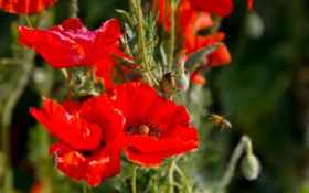 Цветы 20028