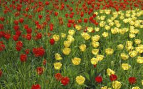 цветы, красивые Фон № 2136 разрешение 1920x1080