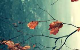 осень, макро Фон № 26501 разрешение 2560x1600