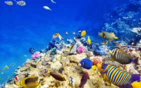 рыбки, underwater, world