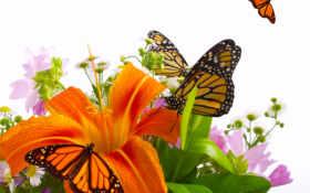 бабочки, цветы, оранжевая