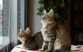 kittens Фон № 26463 разрешение 1920x1200
