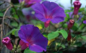 flowers, подборка