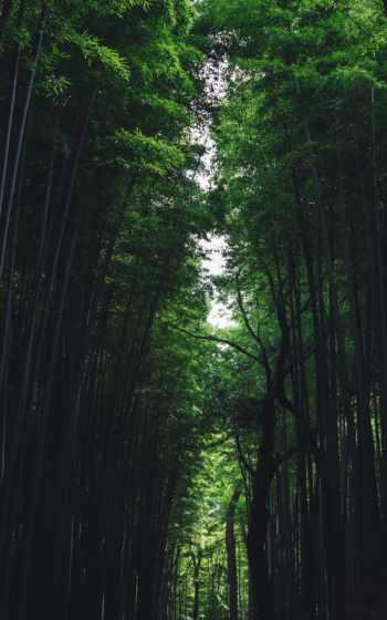 дерево,
