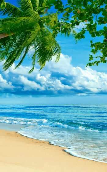 ,, небо, море, тропическая зона, водоем, Карибский, берег, океан, пляж, пальма, arecales, iphone x,apple iphone 5, apple iphone 8,
