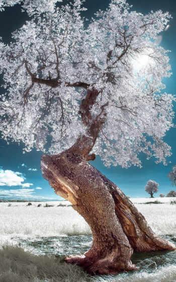 дерево, цветы