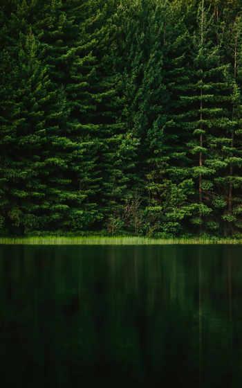 ,, зеленый, природа, лес, природный ландшафт, природная среда, дерево, лист, трава,