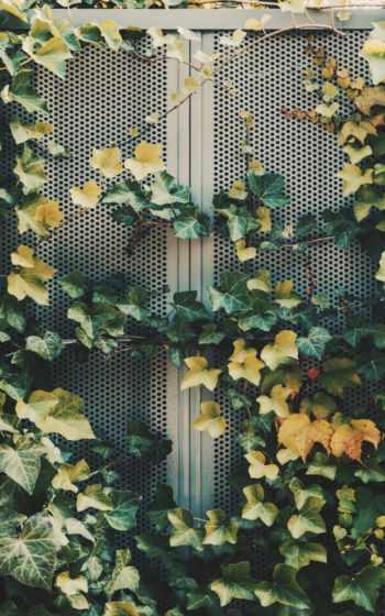 растение,