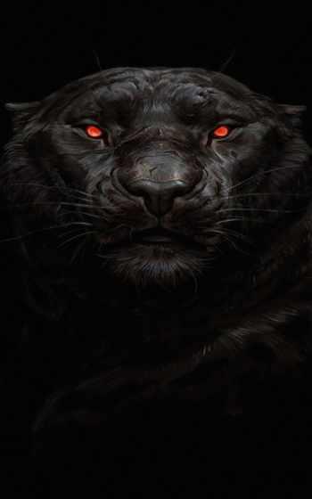 ,, черный, морда, усы, темнота, big cats, felidae, terrestrial animal, хищник, черная кошка,,