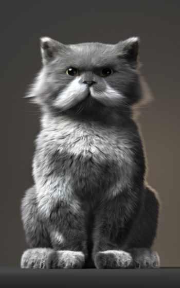 whiskers, волосы, кот, усы