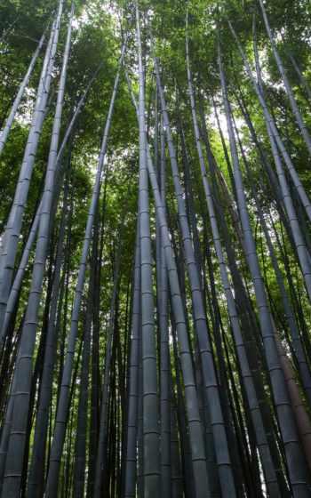 intuitively, nourishing, сквозь, nutrition, вид, пила, прокрутка, wood,