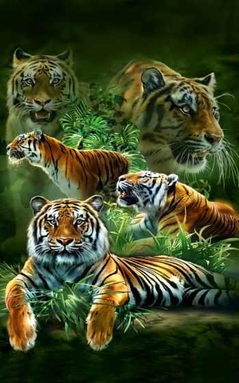 live, free, экран, tigers,