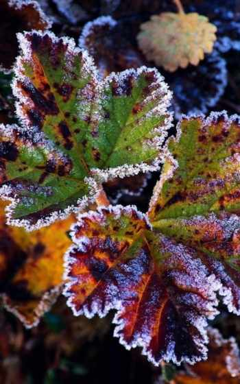 nissan, leaf,