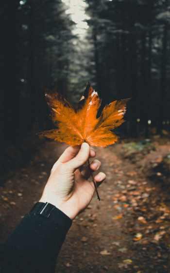 leaf, nissan,
